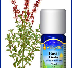 Basil botanical and bottle