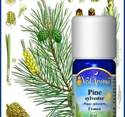 Pine Sylvester org.