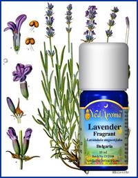 Lavendel fragrant/edel eko. certifierad