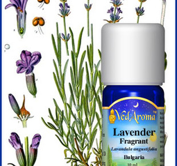 Lavender, fragrant/edel Essential Oil org.