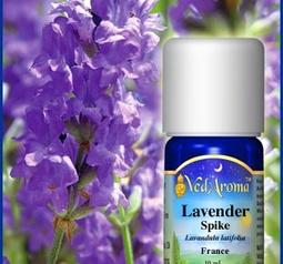 Lavender spike org.