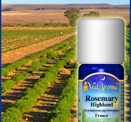 Rosemary highland eko.