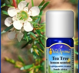 Tea Tree (lemon-scented) Essential Oil eko. certifierad